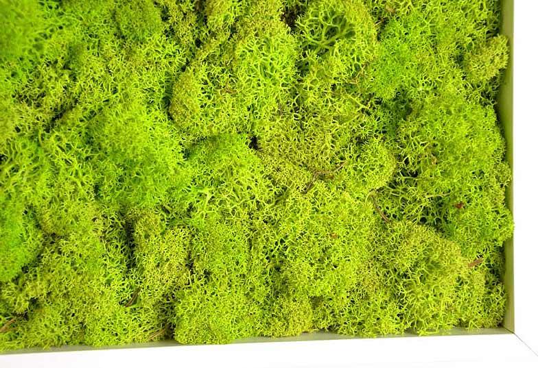 Los jardines verticales de monamour greendesign for Jardin vertical liofilizado