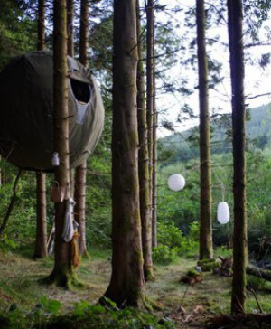 1 tree tents