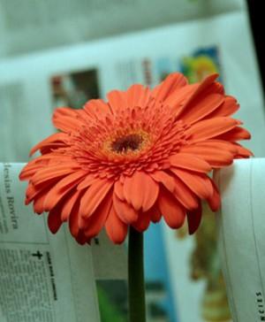 8 girona temps de flors