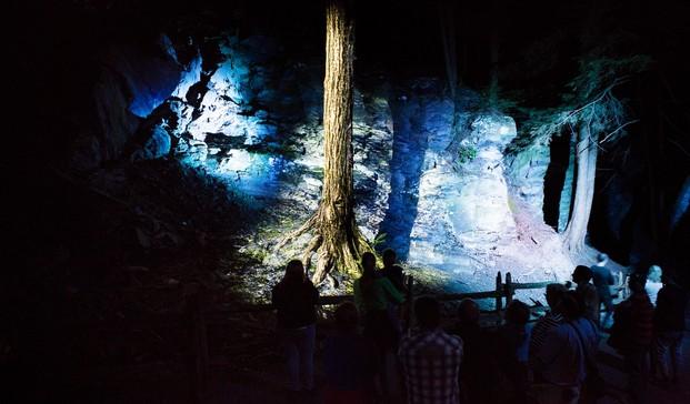 12 foresta lumina