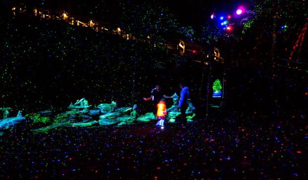 3 foresta lumina