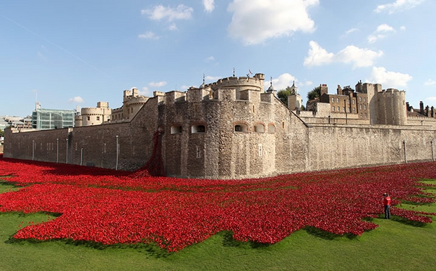 002 tower poppies