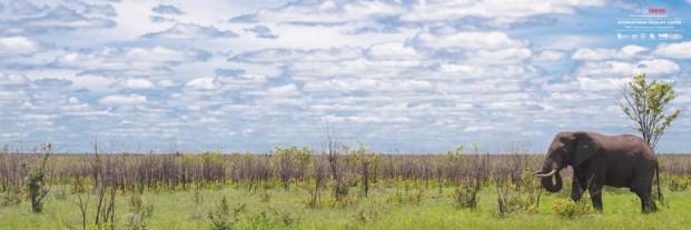Concurso IWC Kruger National Park (3)