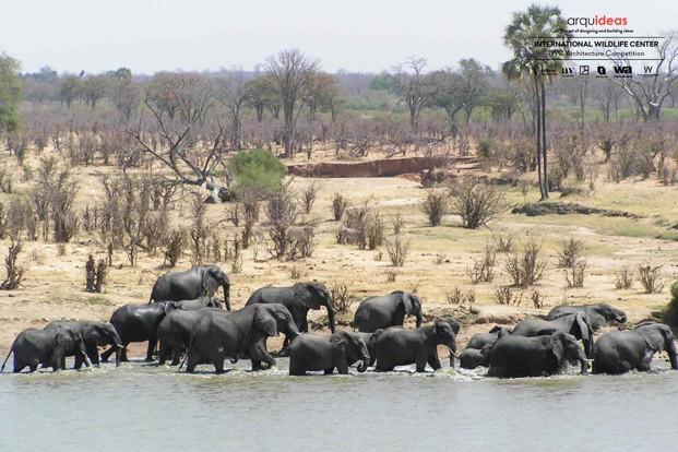 Concurso IWC Kruger National Park (4)