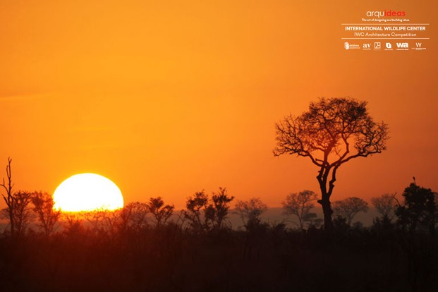 Concurso IWC Kruger National Park (8)