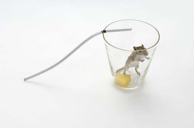 14 Trampas para ratones de Roger Arquer 2