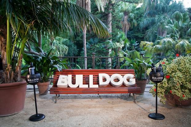 Bulldog fiesta (3)