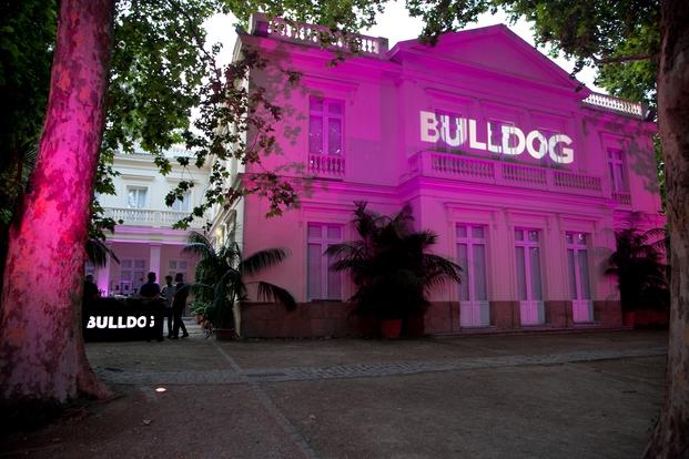 Bulldog fiesta