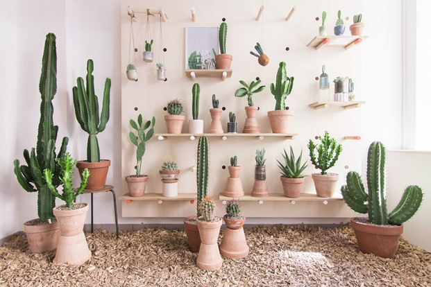 Kaktus København tienda de cactus en copenhage