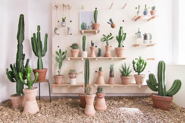 Kaktus København tienda cactus en copenhagen