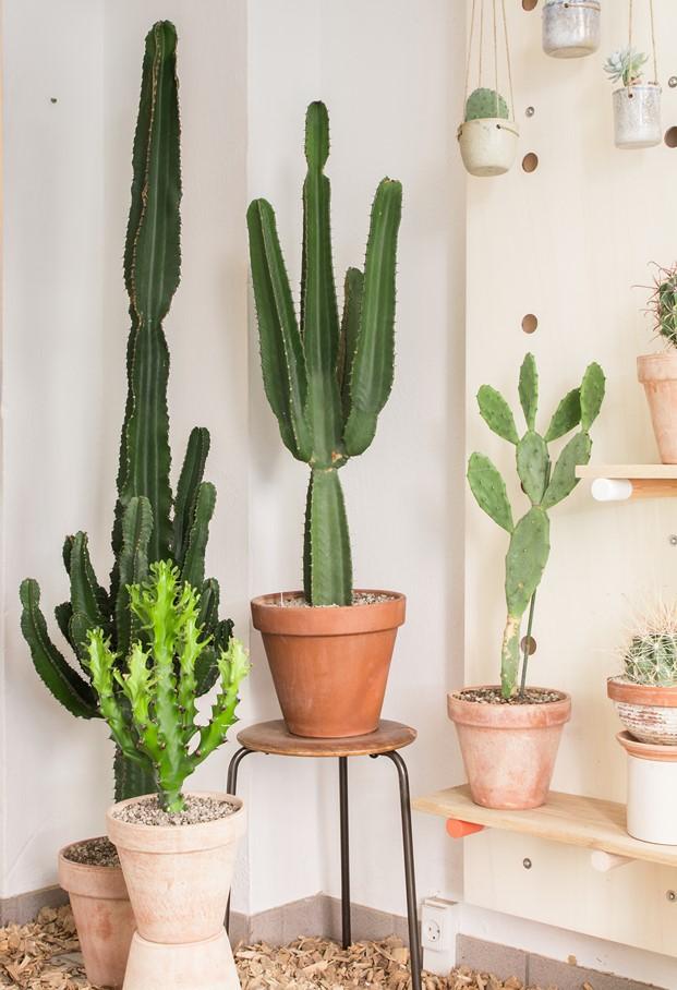 kaktus copenhague tienda cactus y diseño