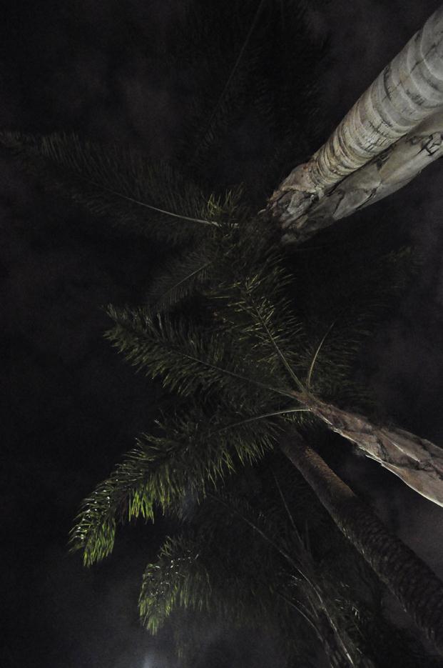 benikaktus-la-fresh-gallery-julio-jimenez-corral (21)