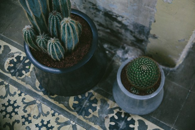 sauvage cactus barcelona diariodesign