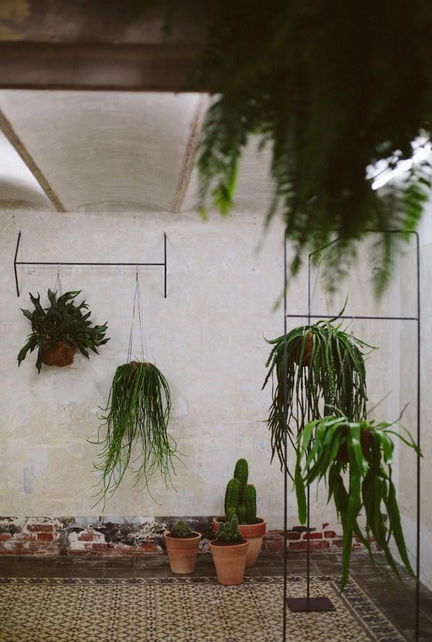 sauvage cactus en barcelona
