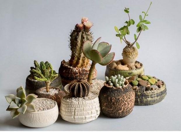 Escuz- Julen Ussia- potted gardens
