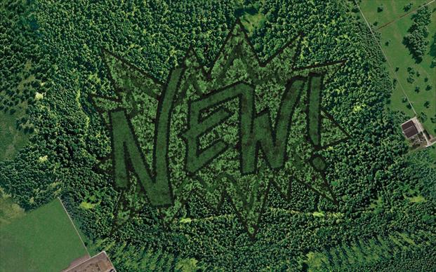 thenewforest_summer-web