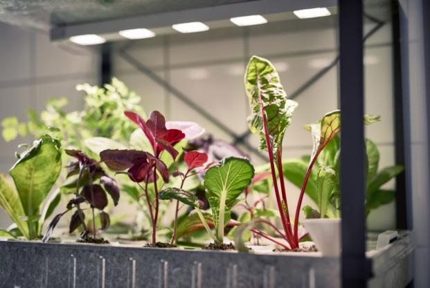 ikea coleccion indoor gardening huerto ecológico diariodesign
