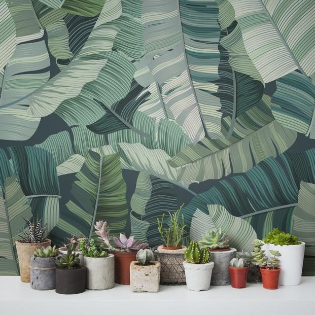 5 tropical murals wallpaper