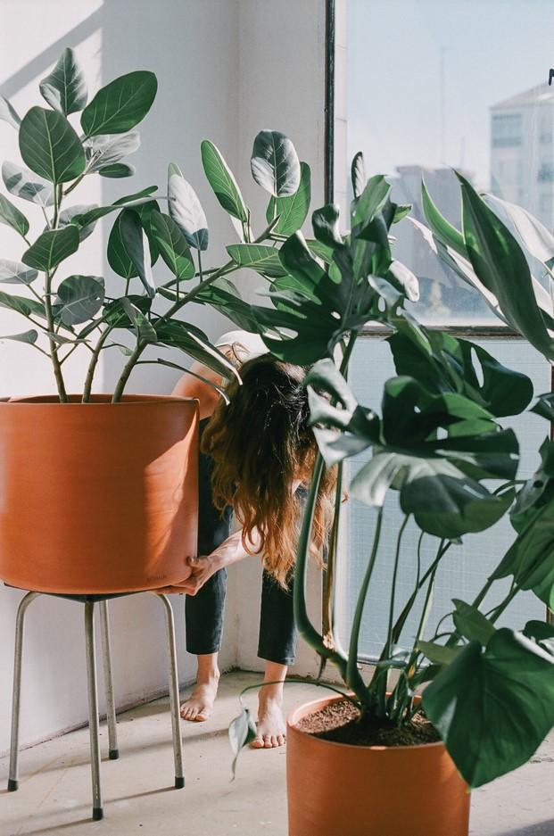 4-descubriendo-balcones-verdes-creative-raval