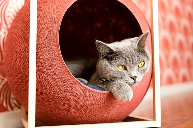 meyou paris le cube en rojo casas para gatos en diariodesign