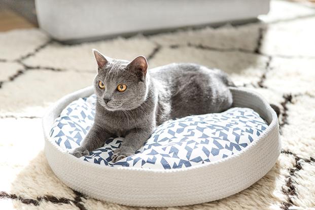 meyou paris le nest casas para gatos diariodesign