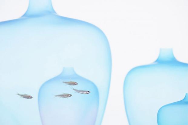 floreros Jellyfish de Nendo