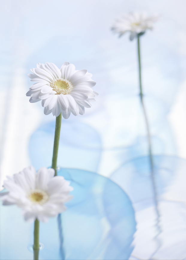 detalle de margaritas de Jellyfish Vases de nendo