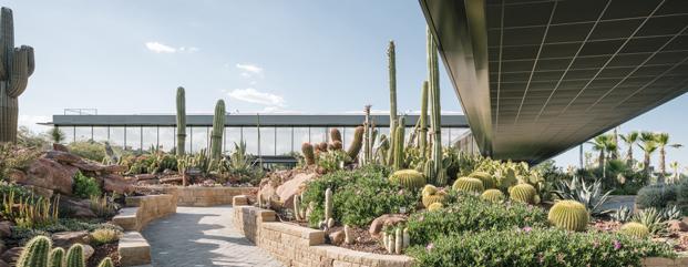 jardin botanico cactus Desert City Jacobo Garcia German Madrid diariodesign