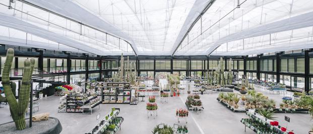 interior jardin botanico cactus Desert City Jacobo Garcia German Madrid diariodesign