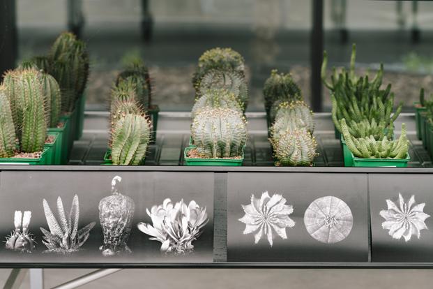 cactus desert city jacobo garcía germán diariodesign