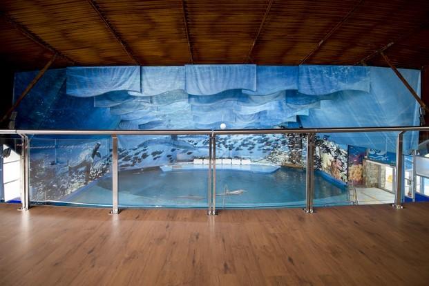 suelos laminados flint floor en el Delfinario del Zoo de Barcelona