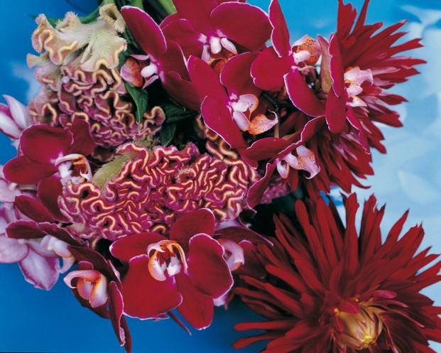 araki fondazione bisazza fotografia flores diariodesign