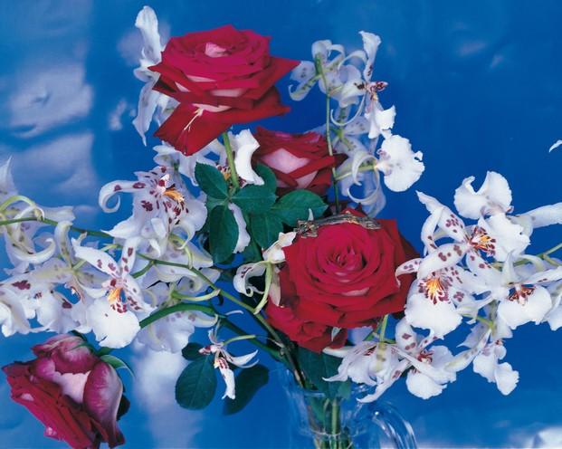 araki fondazione bisazza fotografia floral diariodesign