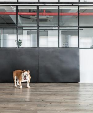 Warehouse HM casa loft Lim Lu puertas cerradas diariodesign