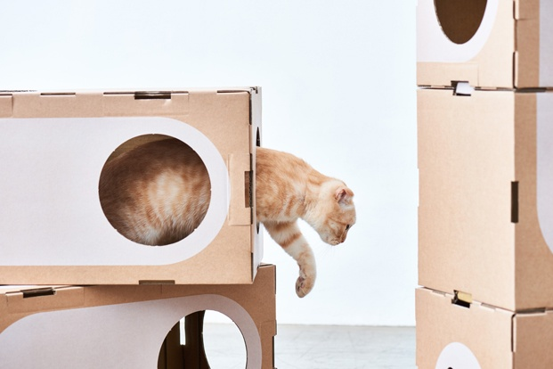 a cat thing diariodesign
