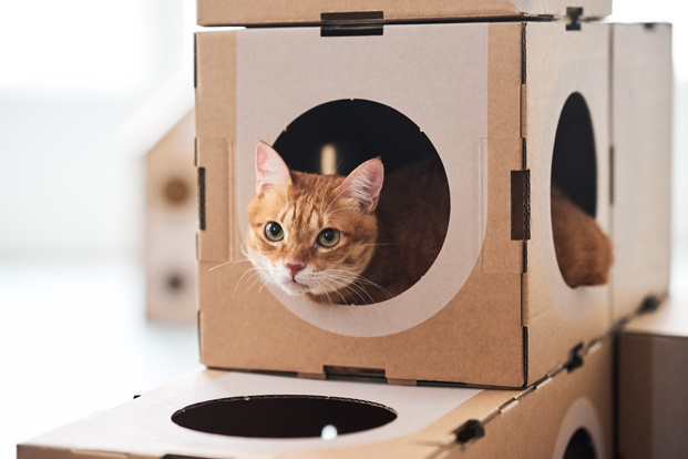 A Cat Thing una ciudad sostenible y un juguete para gatos diariodesign cajas carton