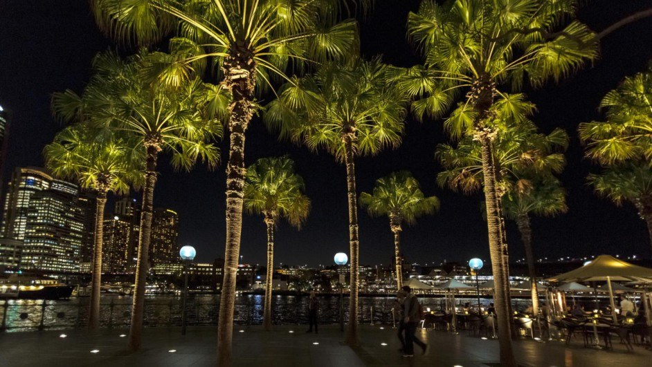 ERCO iluminaria Palm Trees Sydney Muelle Circular Quay Palmeras diariodesign