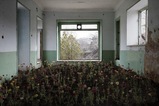 gohar dashti fotografia home ventana y flores diariodesign