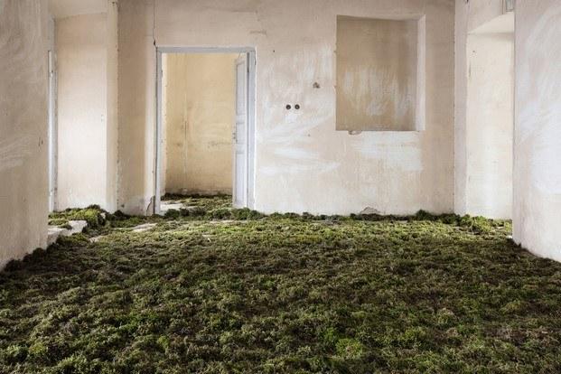 home gohar dashti musgo en el suelo fotografia diariodesign