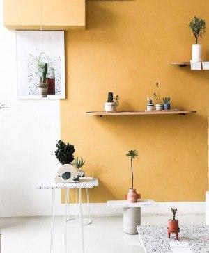 cactus y diseño diariodesign