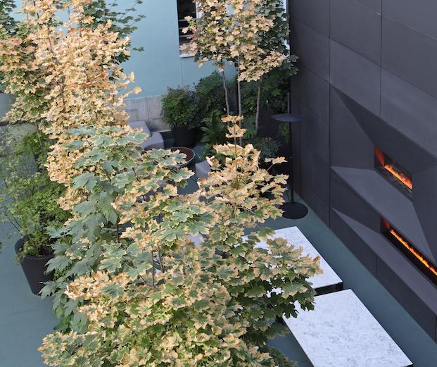 Plantas y chimeneas modernas