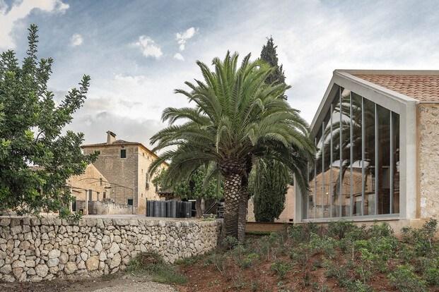 Bodega Ribas Consell Mallorca Moneo. Palmera