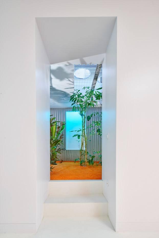 lucernario jardín vivir entre plantas en Madrid