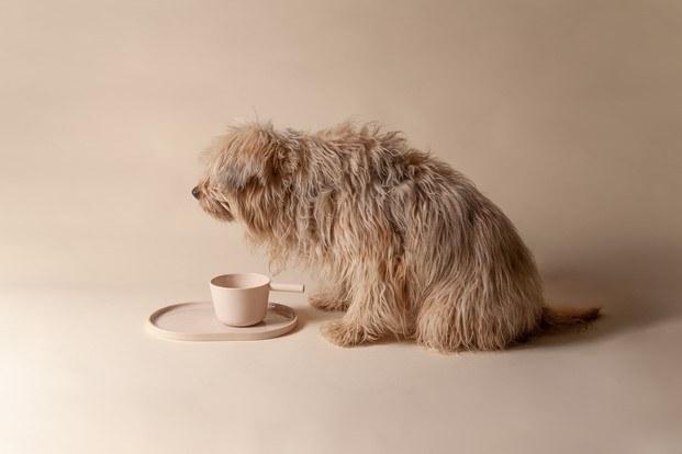 perro con plato y comedero colección casa perezochando