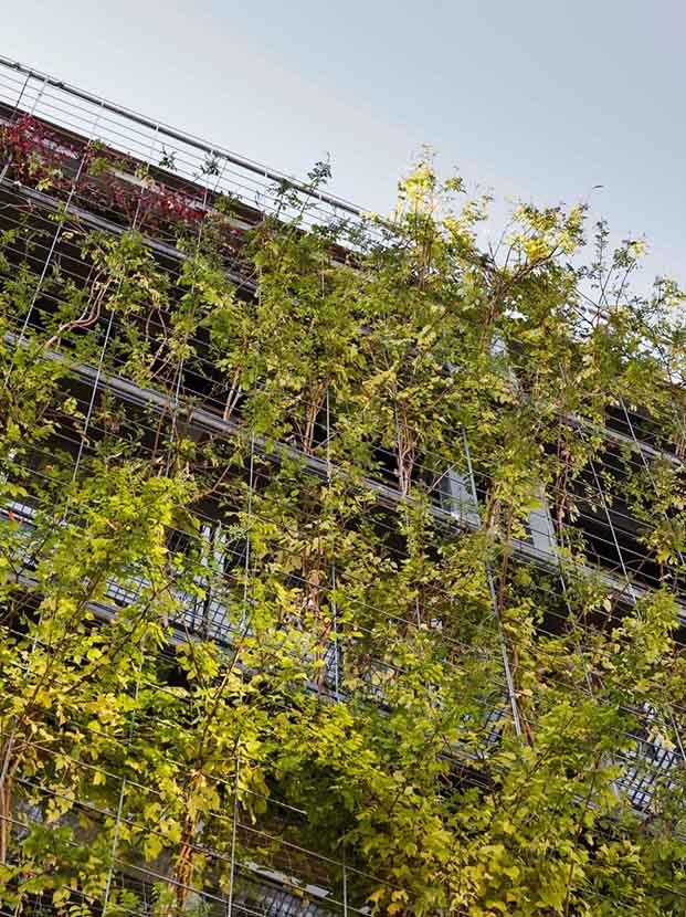 Turo de la Peira. Polideportivo. Anna Noguera arquitecta. Vegetación. Jardín vertical