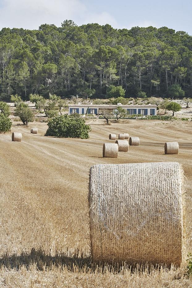 Vista de la casa de vacaciones Palerm en el corazón de Mallorca, rodeada de pinos y campos de cereales